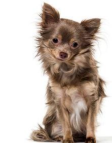 Pension pour petits chiens