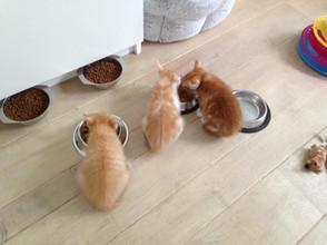Chaton - Cat Sitting - Visite à domicile