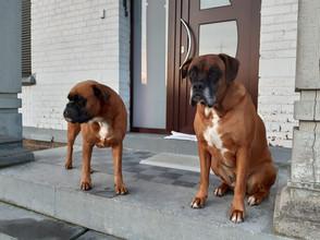 Junior - Dog Sitting - Visite à domicile