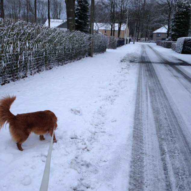 Promenade chien, Dog walking