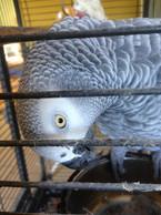 Coco - Pet Sitting - Visite à domicile