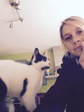 Djoko - Cat Sitting - Visite à domicile