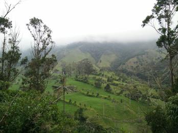 Como visitar o Vale do Cocora - Salento.