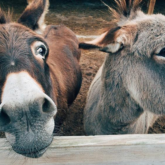 Sunday Service - Lent - The Donkey Reveals a Peaceful Saviour