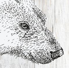 3D Ijsbeer wit