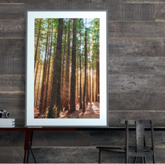 Sequoia Accent