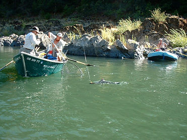 rogue river salmon fishing arrowhead river adventures