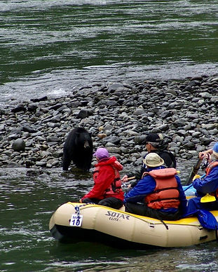 Oregon black bear on the wild and scenic rogue river rafting