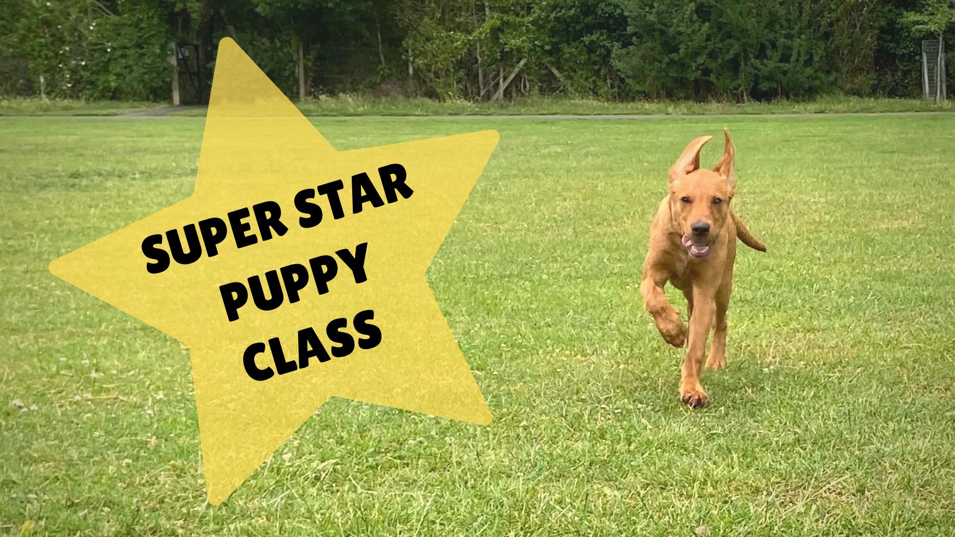 Super Star Pups July Start