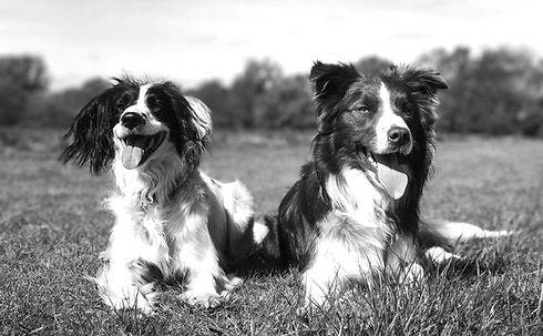Dogs1_edited.jpg
