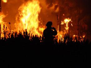 Californie : plus d'un million d'hectares de forêts ont brûlé en 2020