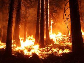Californie : 15.000 pompiers face à des incendies géants