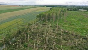 Reims : 150 arbres décapités par une tornade