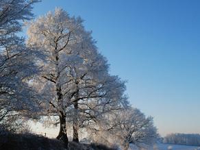 A quand la fin du froid et des gelées ?