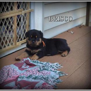 Brisco's Testimonial