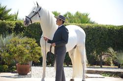 horse151.jpg