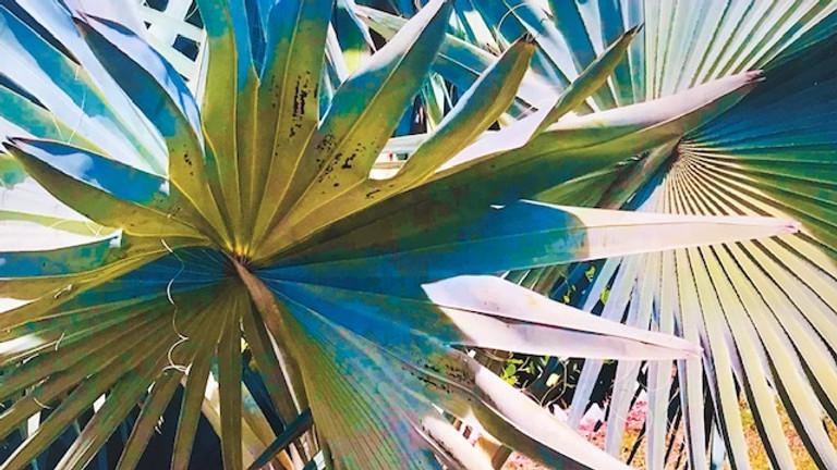 Bismark Palm with Anne Abgott