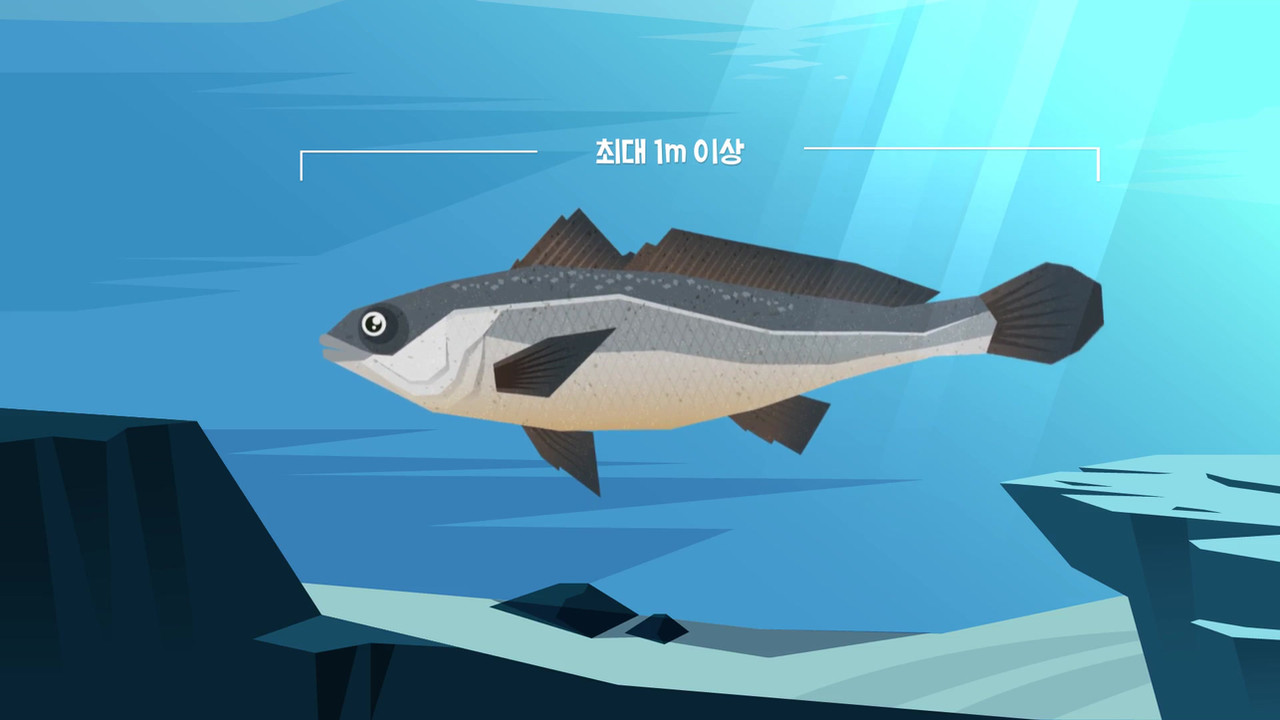 Work_도시어부_CG_물고기 짤.mp4