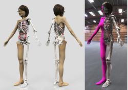 人体模型(3D)