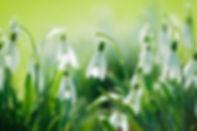 весна 1.jpg