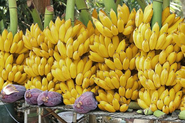 bananos honduras