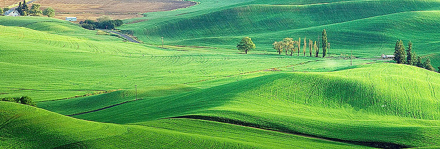 Green Swath.jpg