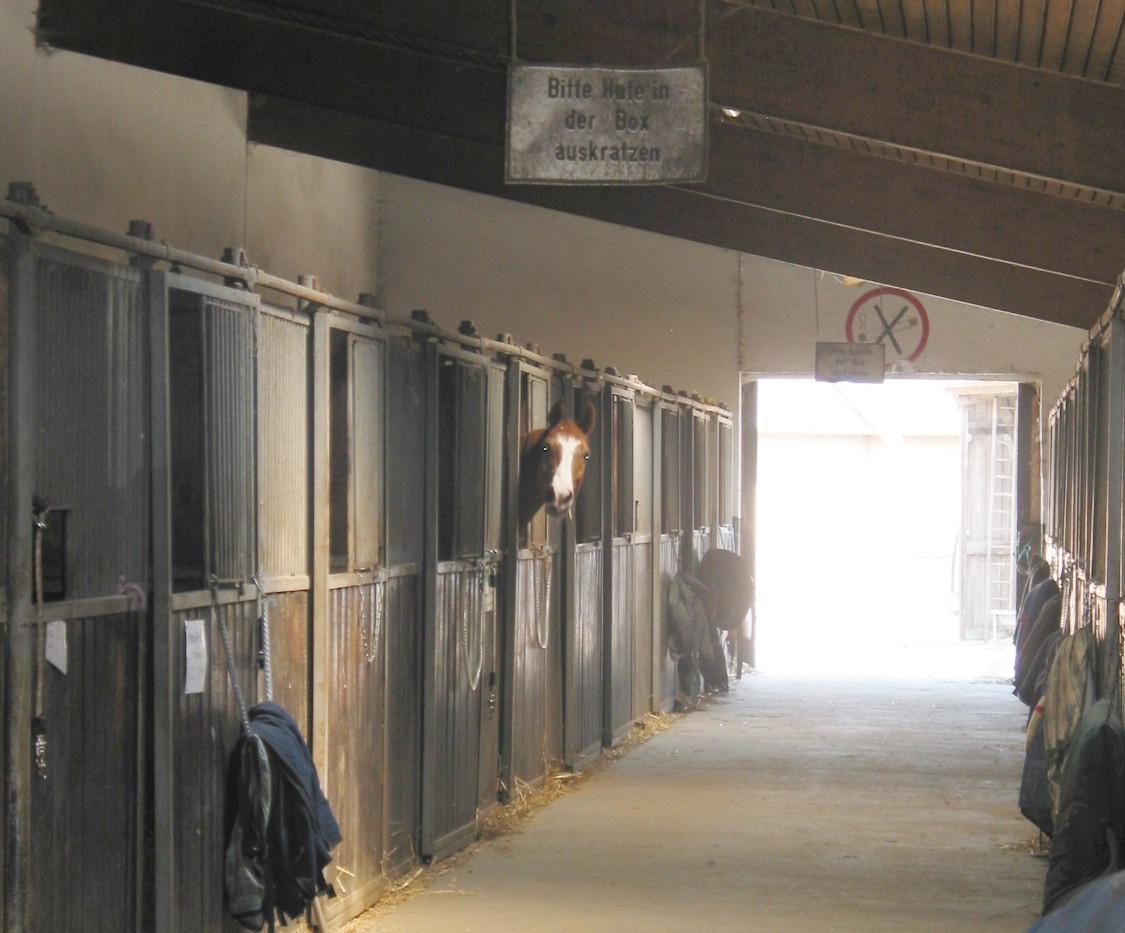 Doppelstallgasse mit Innen- und Außenboxen