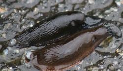 Ketchikan Tours Slug love  170615  191234 Web