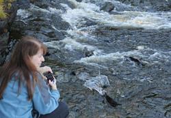 Ketchikan Tours | Salmon up close
