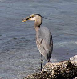 Ketchikan Tours | Heron