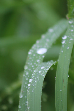 Ketchikan Tours: rain on a leave