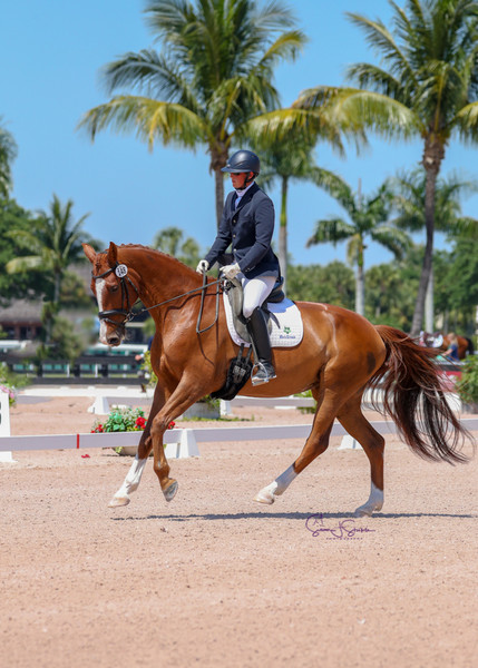 Allison Kavey's young horse Bheatrix competing First Level at the Adequan Global Dressage Festival.