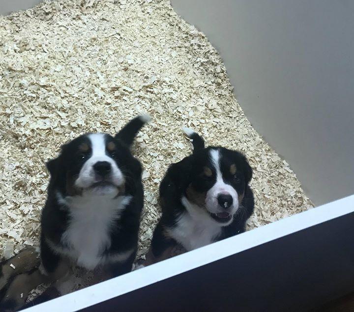 À droite c'est Stella à gauche Milos