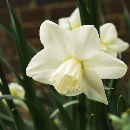 Snowboard Narcissus