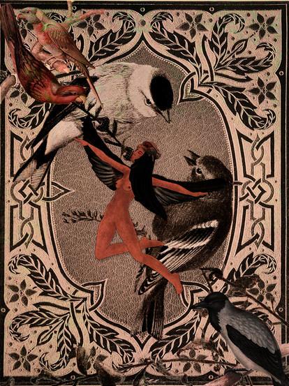 Bird ,2020, illustration & digital collage