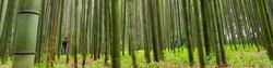 17homebarlayers2-bamboo2