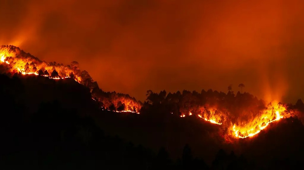 Forest fire raging through night time.