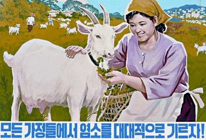 A North Korean poster motivating people to buy goats and milk.