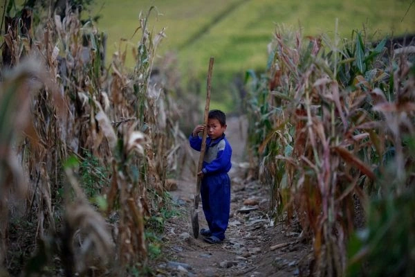 A North Korean child with a shovel.