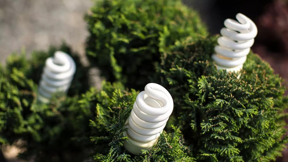 Energy-saving LED bulbs.