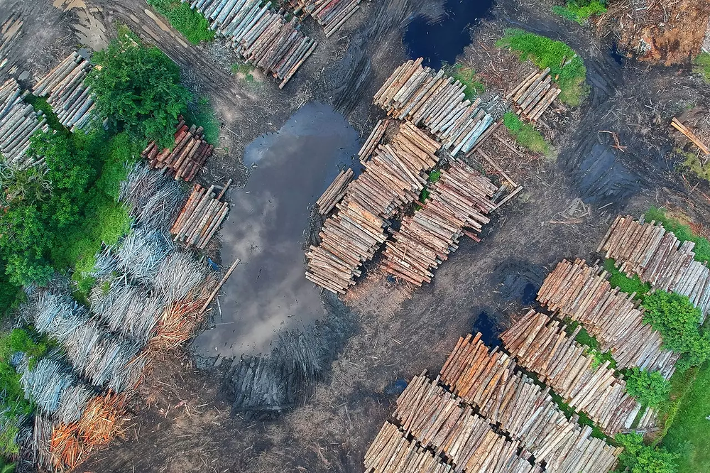 Bird's eye view of a woodpile from deforesting a forest.