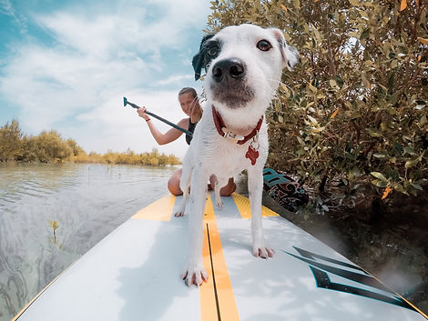 paddle-board-buddy-nominated_t20_goZpB7.