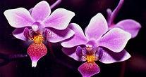 orquideas011.jpg