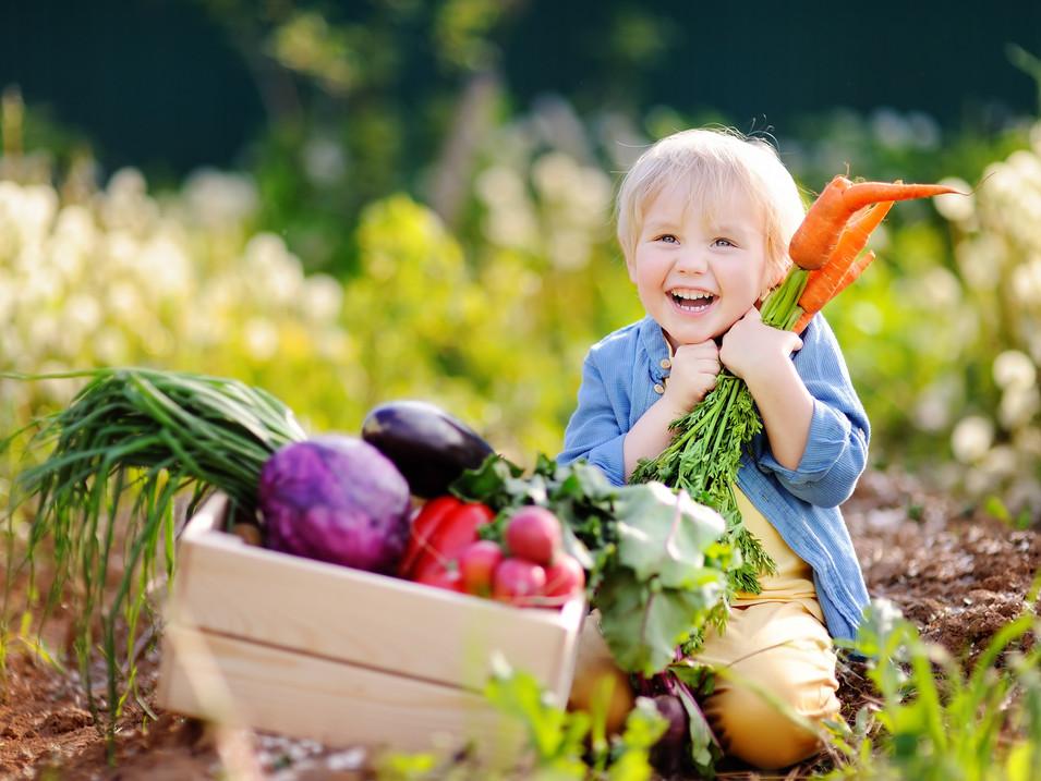 Cute little boy holding a bunch of fresh organic carrots in domestic garden.jpg