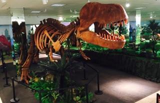 Trex Fossil - Wonder of Dinosaurs
