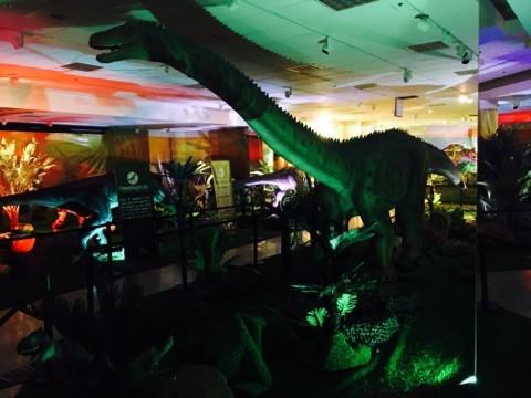 Diplodocus - Wonder of Dinosaurs