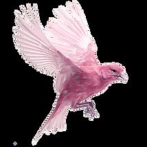 kisspng-harz-roller-bird-finch-ocypete-c