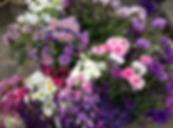 Binnington Blooms