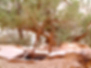 slickhorn canyon 2.JPG