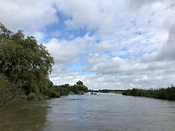 River Arun 2.jpg